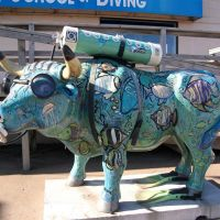 Scuba Ox, Brainerd, MN, Колумбия-Хейгтс