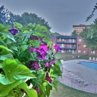 Apartment courtyard, Медисин-Лейк
