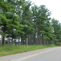 Tall Pines, Миннетонка