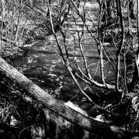 Creek in Hansen 1999, Нью-Брайтон