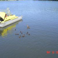 Paddle Boat & Duckling, Рочестер