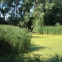 Aug 2005 - St. Louis Park, Minnesota. Otten Pond., Сент-Луис-Парк