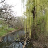 Willow Tree, Эдина