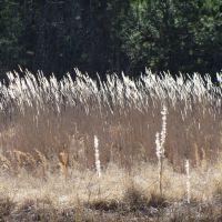 Tall grass blowing in the wind, Батесвилл