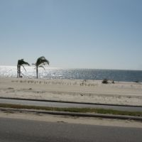three palm trees on the beach, Biloxi, Mississippi, Билокси