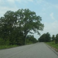 Tree along U.S. 80, Ватер Валли