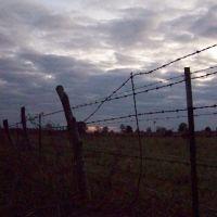 field near Columbus,MS, Вейр