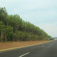 Tree-lined 20, Вест