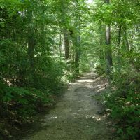 The Old Natchez Trace - June 2011, Древ