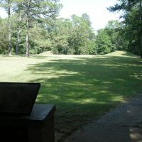 Indian Mounds near the Natchez Trace Pkwy - June 2011, Древ