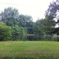 Covington County, Коллинс