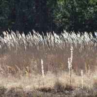 Tall grass blowing in the wind, Лак