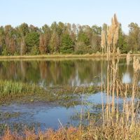 Pond at Trim Cane Creek WMA, Лаурел
