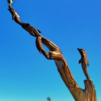 Tree Sculpture, Лонг Бич