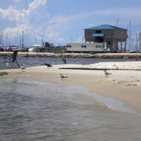 Coast Birds Enjoy the Beach, Лонг Бич