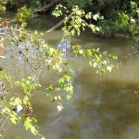 Turkey Creek, Норт Гулфпорт