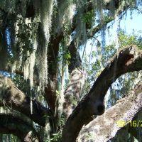mossy oak, Паскагоула