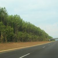 Tree-lined 20, Риджеланд