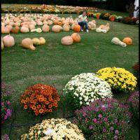 Pumpkin Patch, Смитвилл