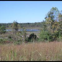 Hidden Bird Pond, Смитвилл
