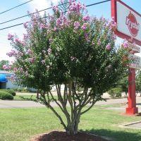 Krystal tree, Флаууд