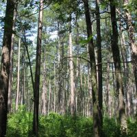 Bienville National Forest on the Shockaloe Trail, Хармони
