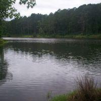 Legion State Park - Lake, Хикори