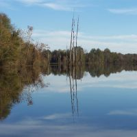 Tombigbee Backwater (2009-11-16 1009 03), Хикори