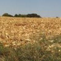 After the corn is gone, Бонн Терр
