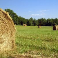 Hay bales (part 2), Варсон Вудс