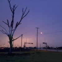 Survivor tree following the EF-5 Tornado that went through Joplin, MO, Джоплин
