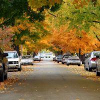 North Kansas City Fall Leaves, Канзас-Сити