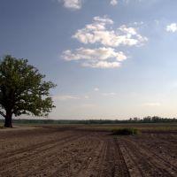 Big tree in a big field, Метц