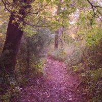 MSSU Nature Trail, Окленд-Парк