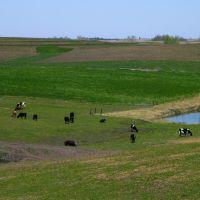 Cattle and Horse, Villisca, Iowa, Олбани (Генри Кантри)
