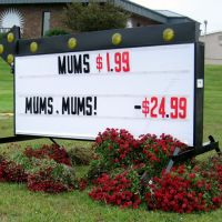Sutherlands Mum Sale - Free?, Олбани (Генри Кантри)