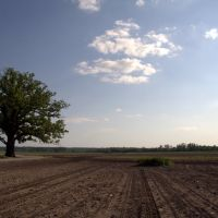 Big tree in a big field, Седар-Сити