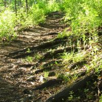 Root steps on the trail in Bluff Nature Area, Ann Arbor, Michigan, Варрен