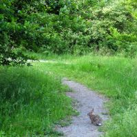 Hopping on the trail in Bandemer Park, Ann Arbor, MI, Варрен
