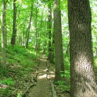 Trail following a tree line (Black Pond Woods Nature Area, Ann Arbor, MI), Варрен