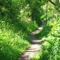 Snaky trail in Black Pond Woods  Nature Area, Ann Arbor, MI, Варрен