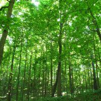 Woods in Dhu Varren Nature Area, Ann Abor, Варрен