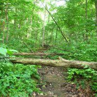 Dried brook in Leslie Woods Nature Area, Варрен