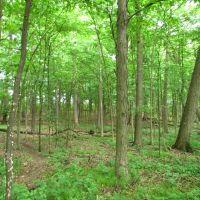 Trail in Stapp Nature Area, Ann Arbor, Варрен