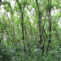 Nature area in Tuebingen Park, Варрен