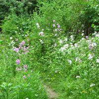 Floral trail in Traver Creek Park, Варрен