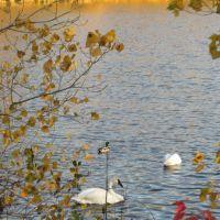 Olson Park in fall, Варрен