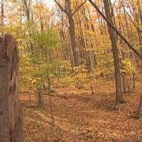 Golden Forest in Davison, MI, Гудрич