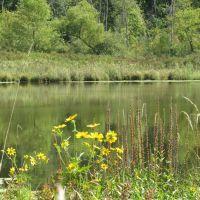 Flowers on Algoe Lake, Гудрич
