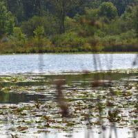 Hartwig Lake, Гудрич